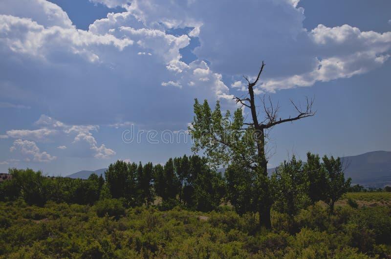 Een dwars gevormde boom in het open platteland stock foto's