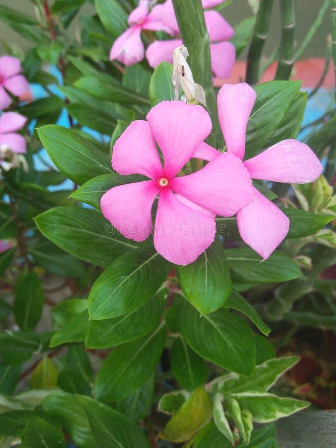 een echte bloem stock foto's