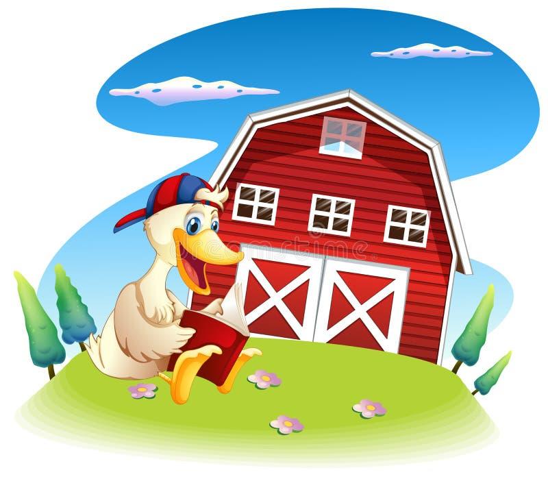 Een eendlezing dichtbij barnhouse royalty-vrije illustratie