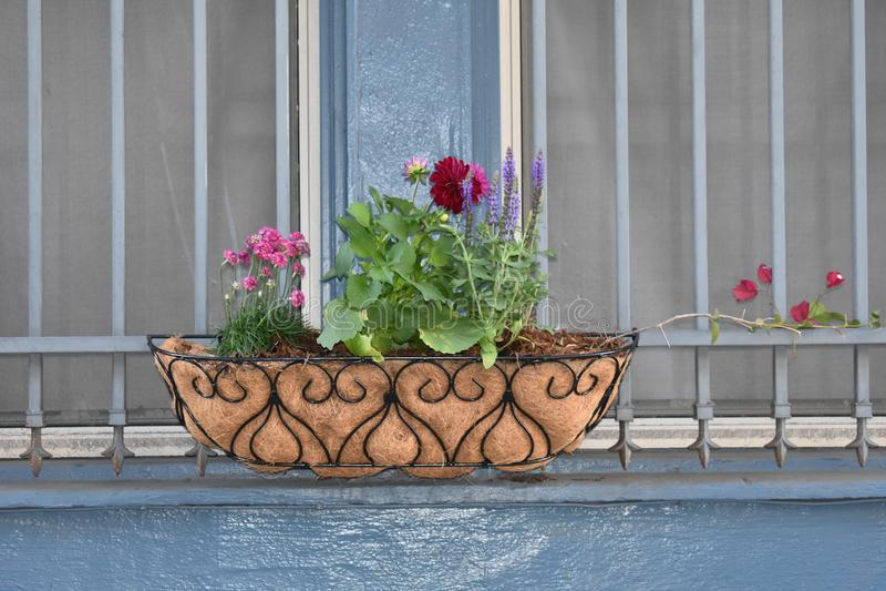 Een eenvoudige plons van bloem om eender welke richel omhoog op te helderen royalty-vrije stock foto