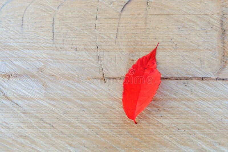 Een eenzaam rood blad op een houten achtergrond, daling kleurt textuur hoogste mening stock afbeelding