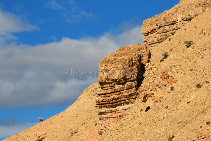 Een eenzaam schaap op de horizon, Chubut, Argentinië royalty-vrije stock fotografie