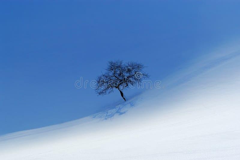 Een eenzame appelboom royalty-vrije stock fotografie