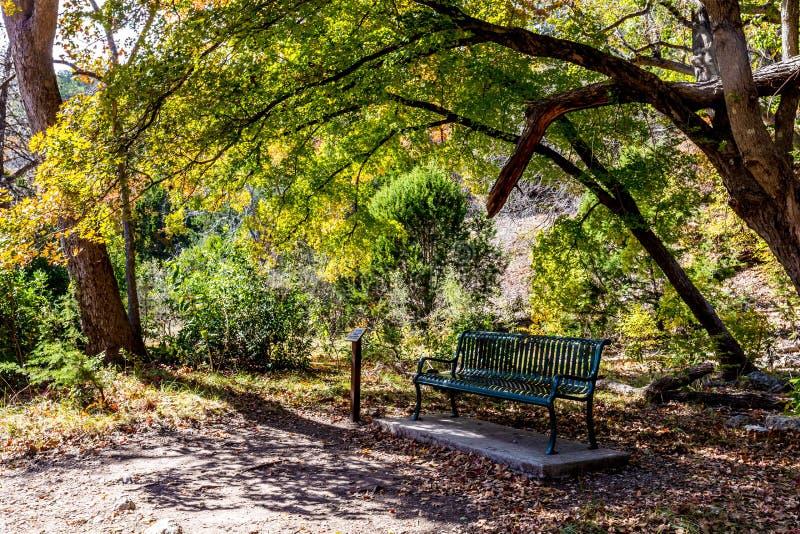 Een eenzame bank in de schaduw van een grote esdoornboom in Texas royalty-vrije stock fotografie