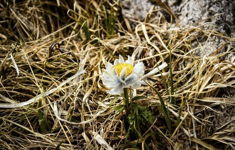 Een eenzame bloem royalty-vrije stock afbeelding