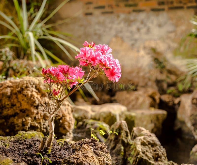 Een eenzame bloem stock foto's