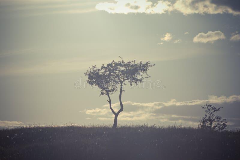 Een eenzame boom boven op een heuvel royalty-vrije stock afbeelding