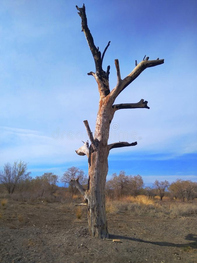 Een eenzame boom royalty-vrije stock foto