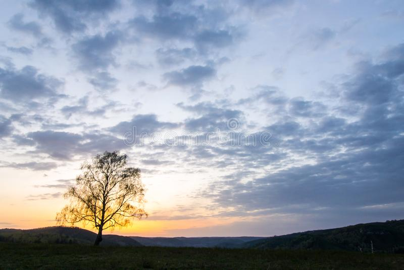Een eenzame boom in de stralen van de het toenemen zon op de achtergrond stock foto