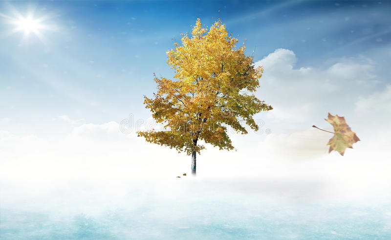 Een eenzame boom in een koud en winderig landschap bij de herfst royalty-vrije stock foto