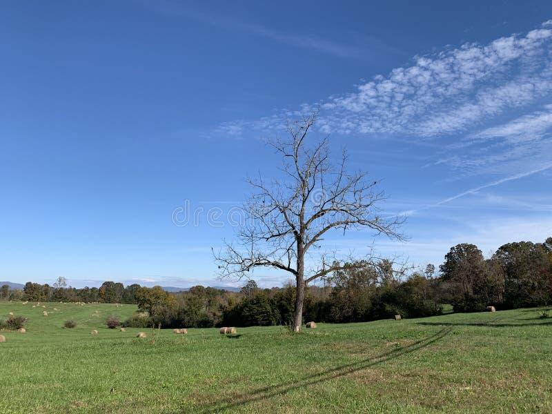Een eenzame boom in een grasrijk landschap met de blauwe hemel en de witte wolken stock foto's