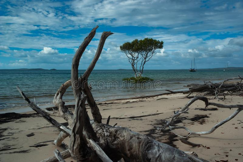 Een eenzame boom in het overzees met een strandhoogtepunt van drijfhout royalty-vrije stock foto's