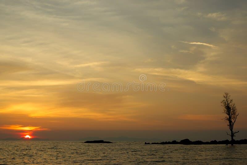 Een eenzame boom let op de zonsondergang bij de oceaan royalty-vrije stock fotografie