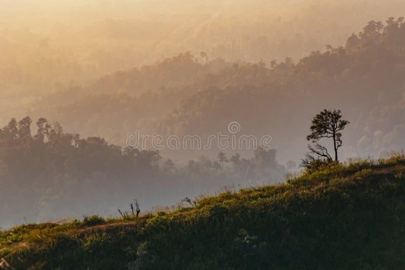 Een eenzame boom met heuvel op de achtergrond stock afbeelding