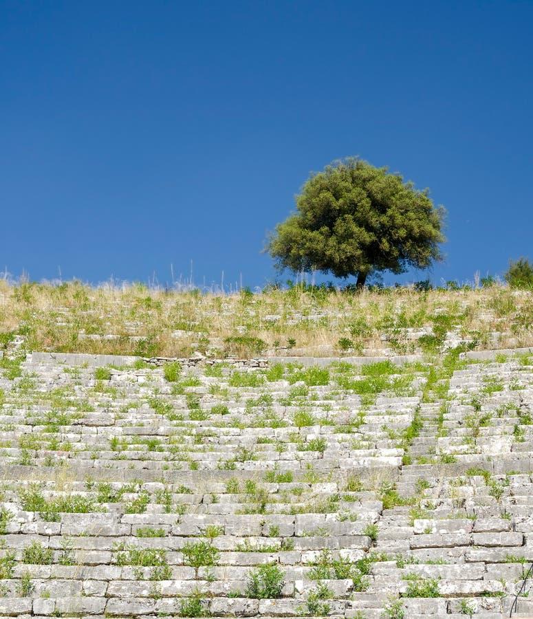 Een eenzame boom op de rand van oude ruïnes royalty-vrije stock foto
