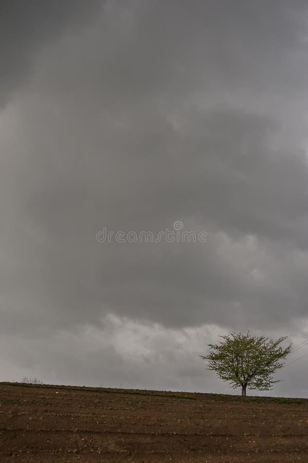 Een eenzame boom tegen een het dreigen grijze hemel stock foto's