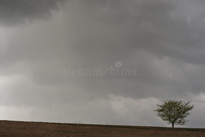Een eenzame boom tegen een het dreigen grijze hemel royalty-vrije stock fotografie