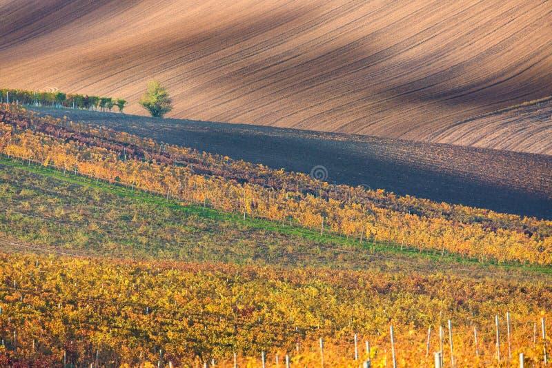 Een eenzame de herfstboom tegen de achtergrond van het moravian gebied royalty-vrije stock fotografie