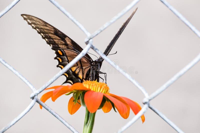 Een eenzame die vlinder achter een omheining wordt opgesloten stock afbeeldingen