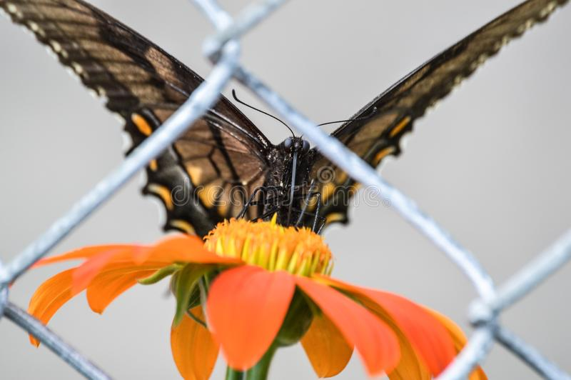 Een eenzame die vlinder achter een omheining wordt opgesloten royalty-vrije stock afbeeldingen
