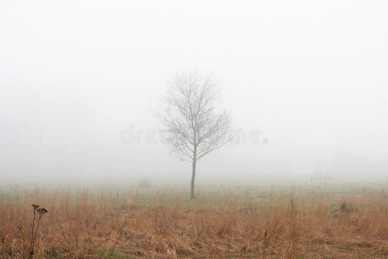 Een eenzame kleine boom in de mist in een lege partij in de lente vroeg in de ochtend royalty-vrije stock foto's