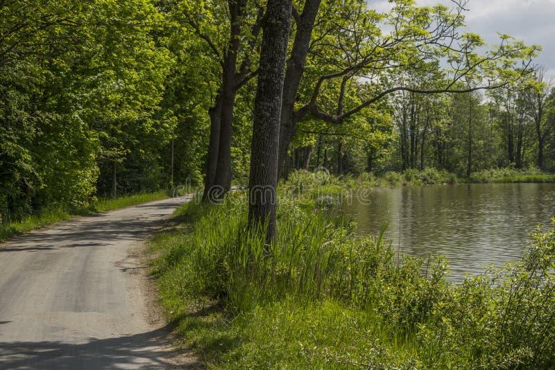 Een eenzame weg door het meer stock afbeeldingen