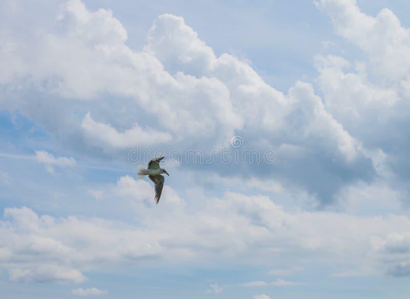 Een Eenzame Zeemeeuw die door de Lucht stijgen royalty-vrije stock afbeeldingen