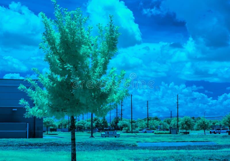 Een eiken boom onder de de hete, zomerzon van Texas stock afbeeldingen