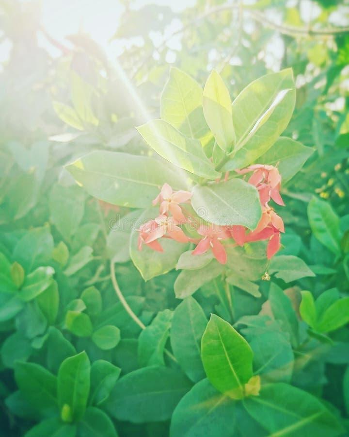 Een enkel rode bloem royalty-vrije stock afbeeldingen