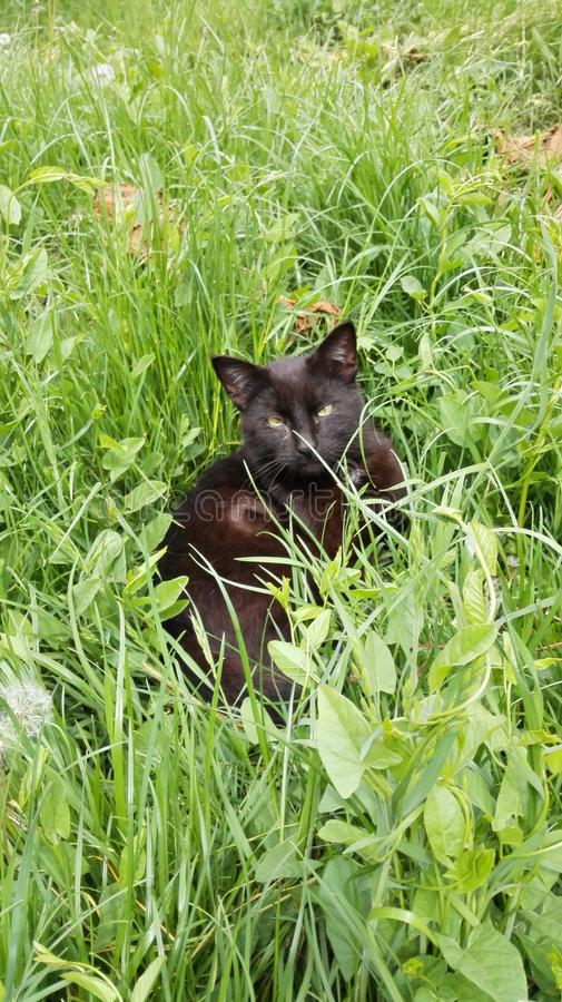 Een enkel zwarte kat royalty-vrije stock fotografie