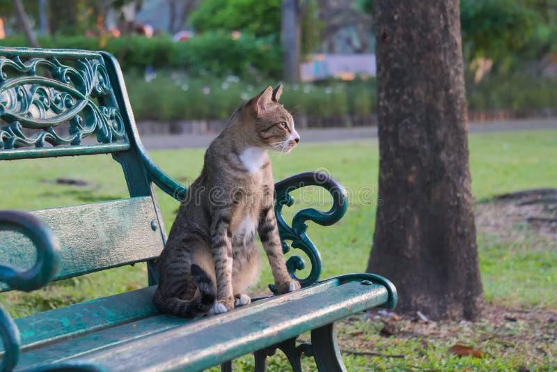 Een in evenwicht gehouden, mooie verdwaalde kat ziet de ochtendzonsopgang onder ogen, en wacht op traktaties van vriendelijke vre royalty-vrije stock afbeelding