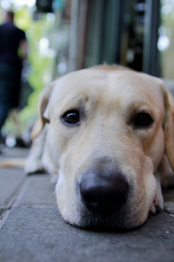 Een expectative hond stock afbeelding