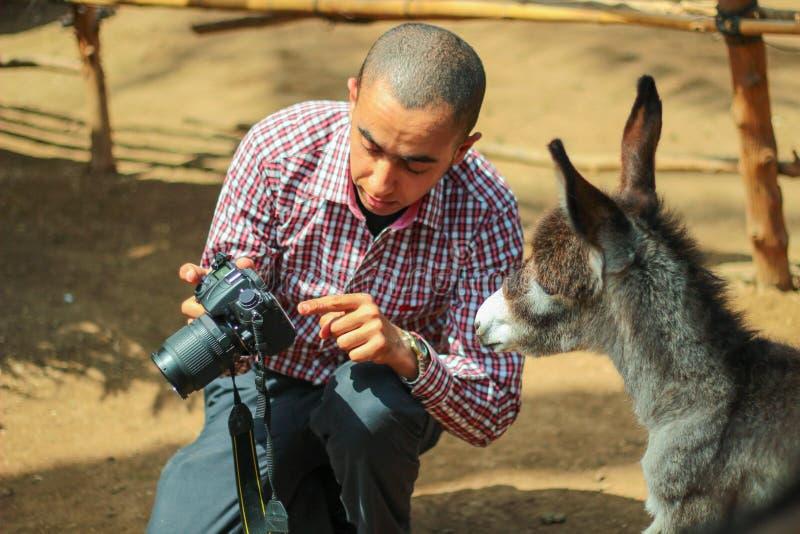 Een ezel die zijn foto controleren royalty-vrije stock foto