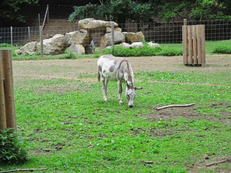 Een ezel in een park royalty-vrije stock afbeeldingen
