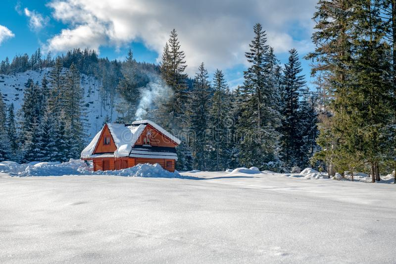Een fairytaleplattelandshuisje, alleen tribunes bij de rand van het bos, onder oude sparren stock foto's