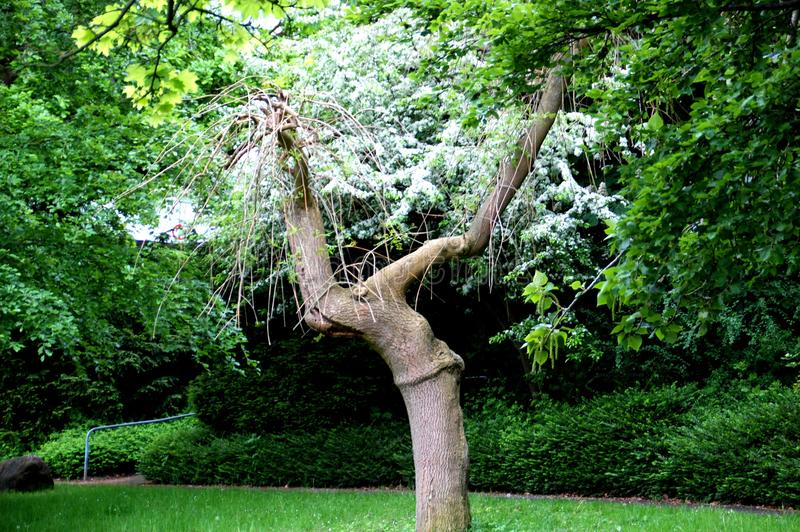 Een fee zoals boom in een echt park stock foto