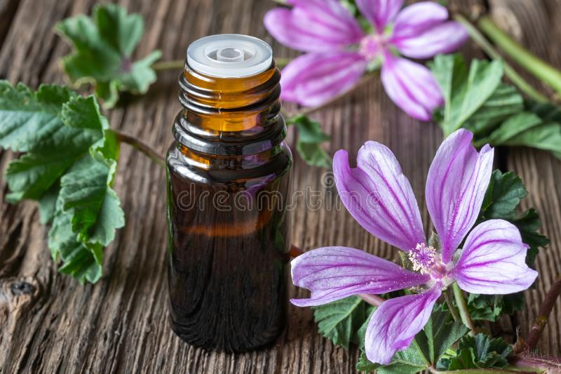 Een fles gemeenschappelijke malveetherische olie met verse bloeiende malva sylvestristakjes stock foto's