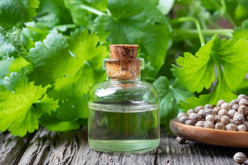 Een fles korianderetherische olie met korianderzaden en verse koriander gaat weg royalty-vrije stock afbeeldingen