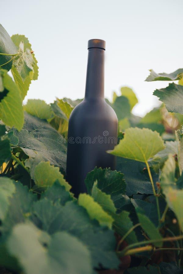 Een fles van zwarte op de achtergrond van druivenbladeren, in de bladeren, op de straat wijngaard in het platteland naughty royalty-vrije stock afbeeldingen