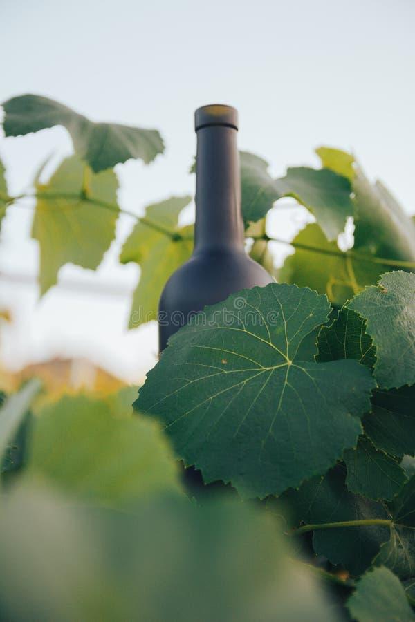 Een fles van zwarte op de achtergrond van druivenbladeren, in de bladeren, op de straat wijngaard in het platteland naughty royalty-vrije stock foto's
