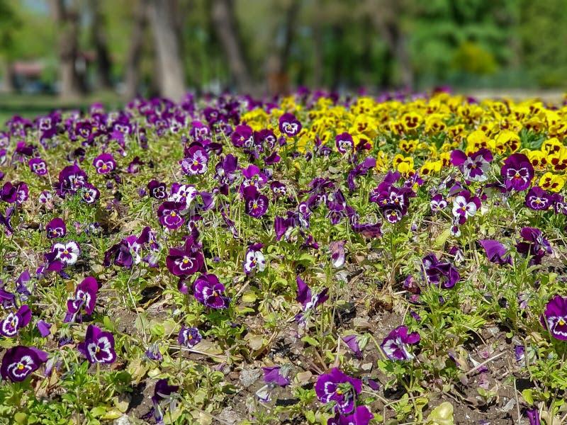 Een foto van kleurrijke bloemen in bokeh stock fotografie
