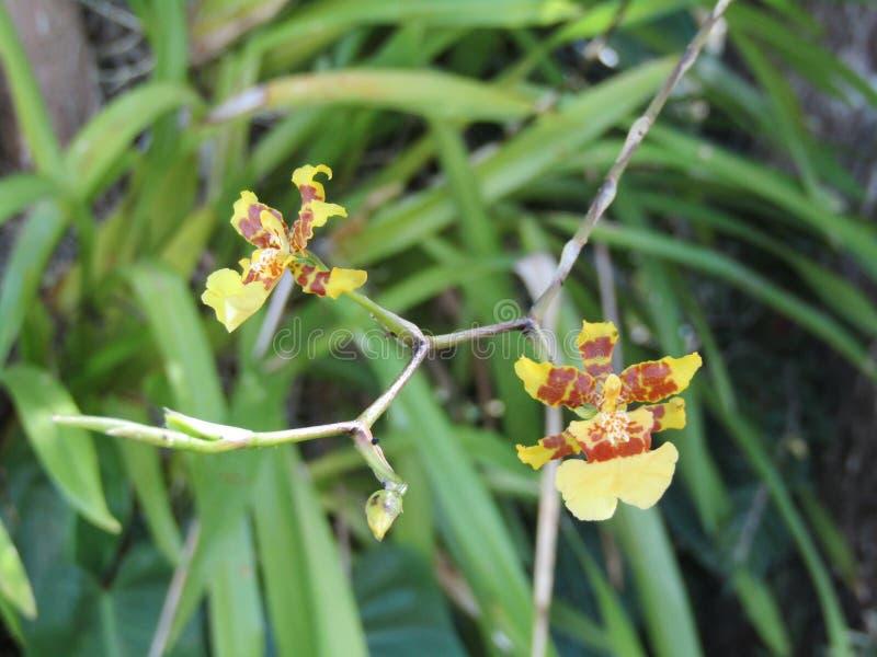 Een foto van twee kleine bloemen royalty-vrije stock afbeelding