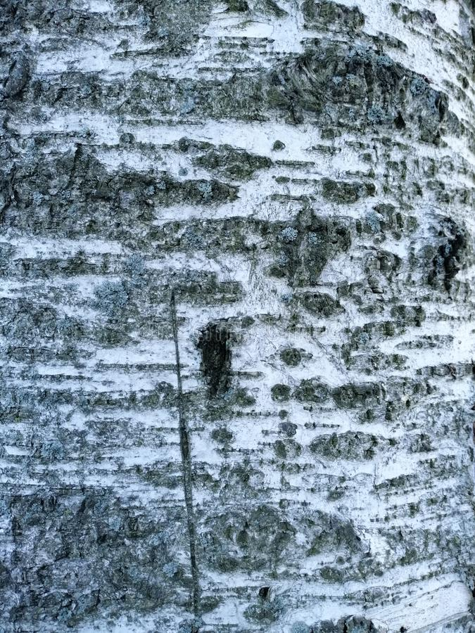 Een fragment van boomschors stock afbeelding
