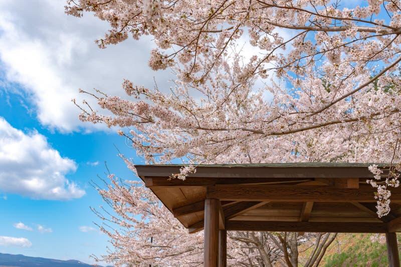 Een gazebo en volledige bloei bloeit de mooie roze kersenbloesems royalty-vrije stock foto