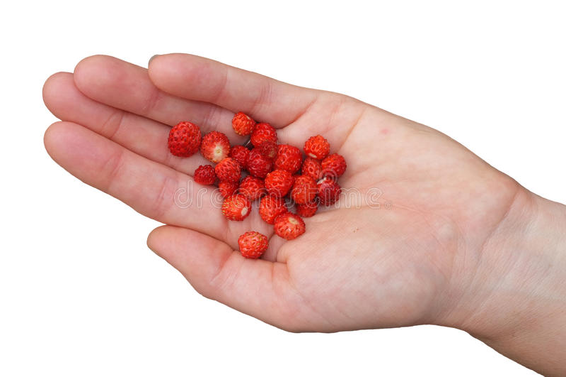 Een geïsoleerd handvol wilde aardbeien royalty-vrije stock afbeelding