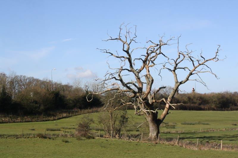 Een geïsoleerde naakte boom op een gebied stock foto's