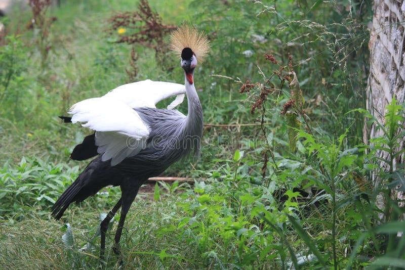 Een gealarmeerde vogel stock afbeeldingen