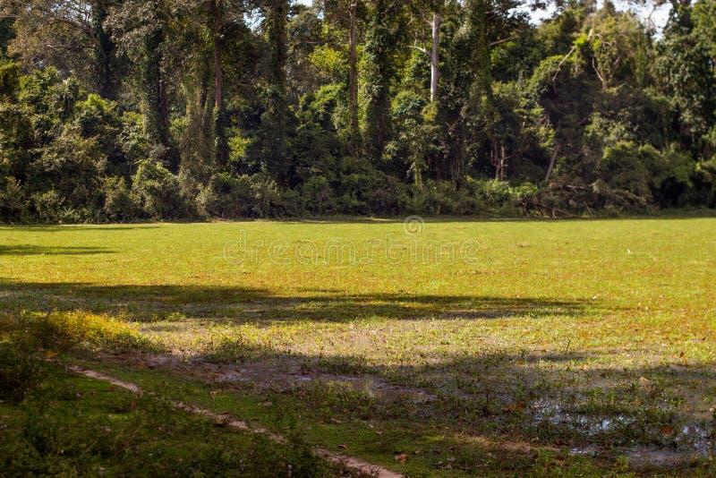 Een Gebied in de Wildernis Angkor Thom, Kambodja stock foto's