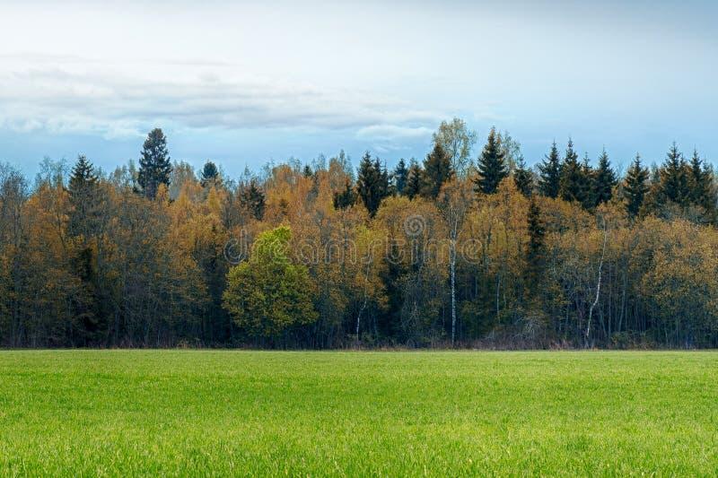 Een gebied met gras en bos de Herfstlandschap dat wordt uitgestrooid royalty-vrije stock foto's