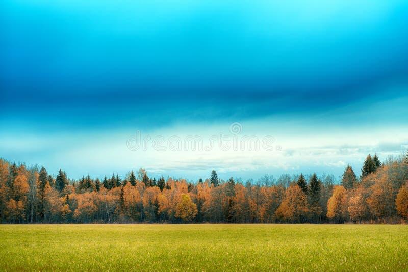 Een gebied met gras en bos de Herfstlandschap dat wordt uitgestrooid royalty-vrije stock afbeelding